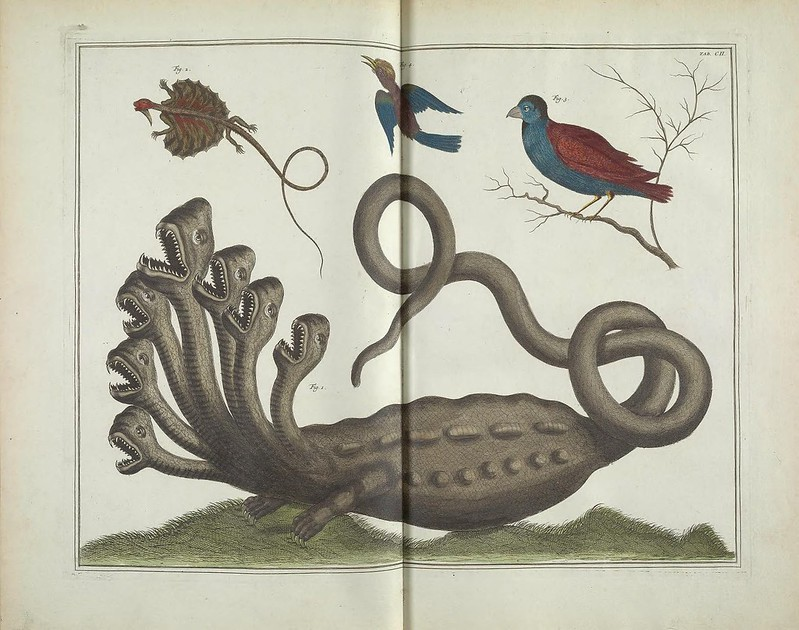 Historic drawing of a lizard monster with six heads underneath two birds and a flying lizard.