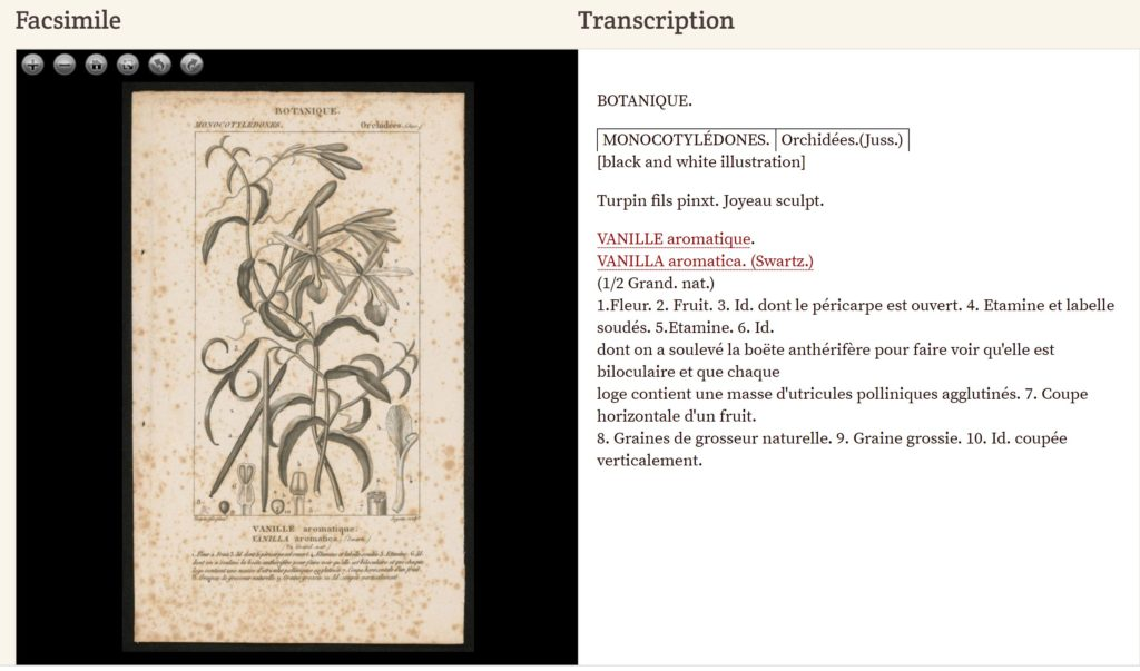 The top banner says transcription. Underneath this banner is an image of a plant on the left with writing beneath it. On the right hand side is an example of transcribed text from the image.
